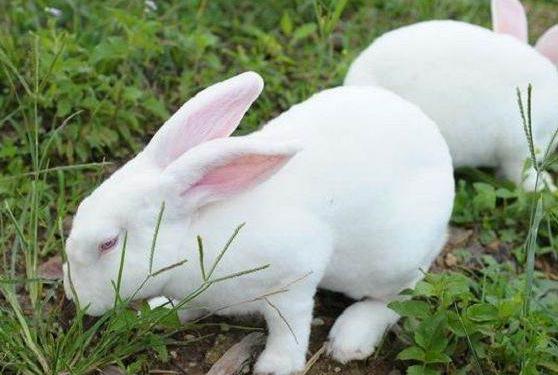兔子的生活习性