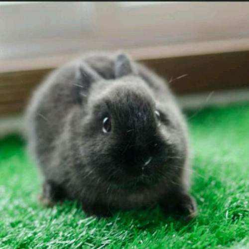 怎么养兔才能不臭有好看