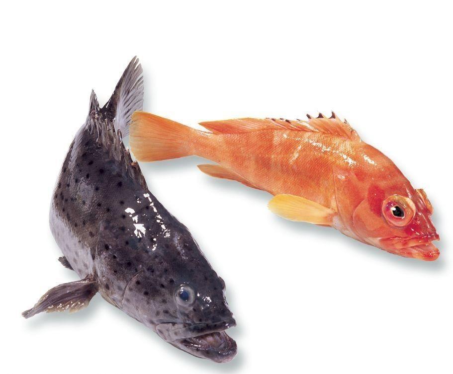 石斑鱼多少钱一斤