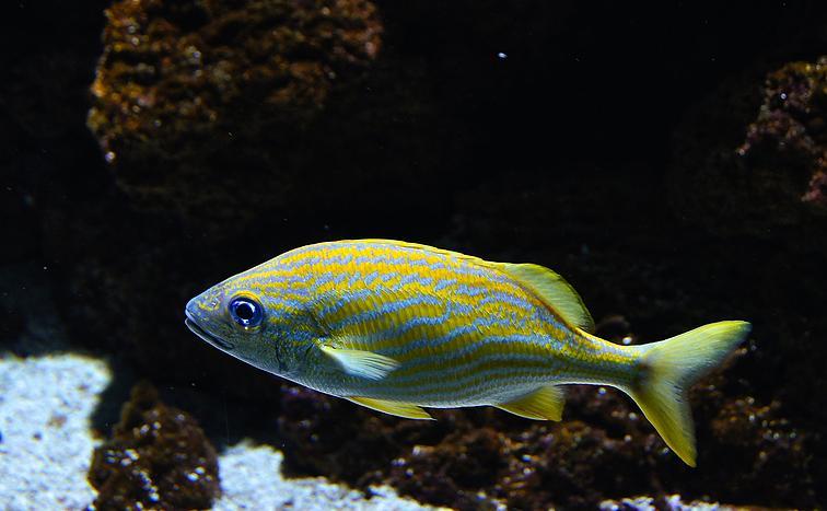 深海鱼的种类以及营养价值