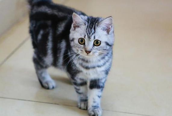 猫咪品种有哪些