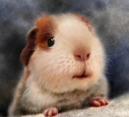 豚鼠的需要什么样的生长条件
