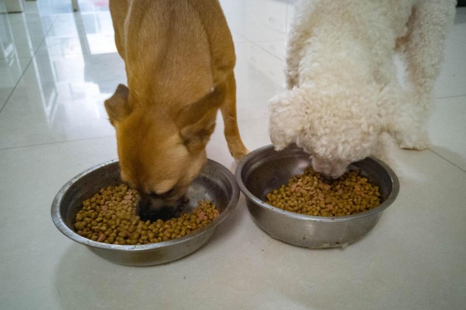 狗粮是不是越贵的就越适合狗狗