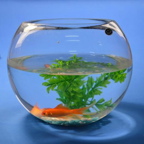 鱼缸水浑浊原因和解决方案