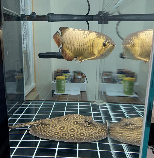 认识鱼缸水浑浊原因和解决方案,鱼缸水浑浊原因解决方案