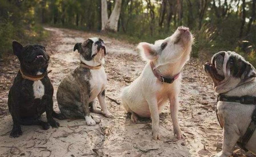 狗的生活习性