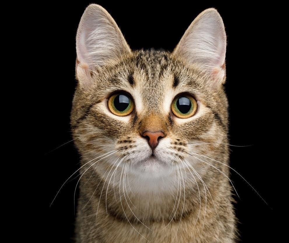 狸花猫的性格怎么样?有什么特点?