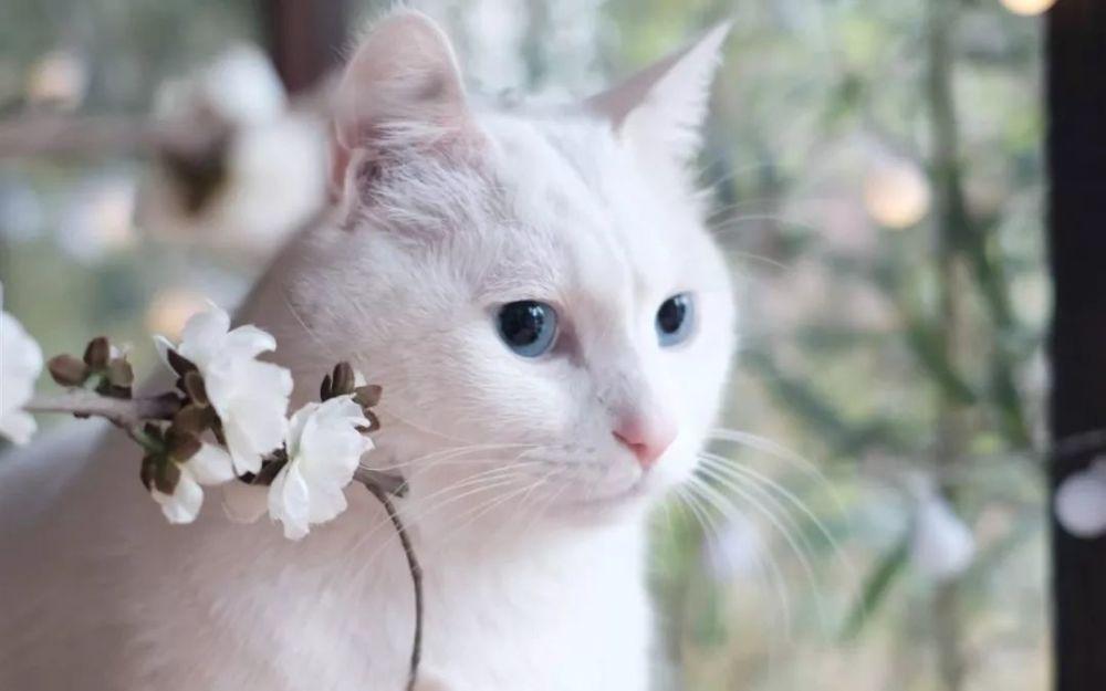 猫应激反应