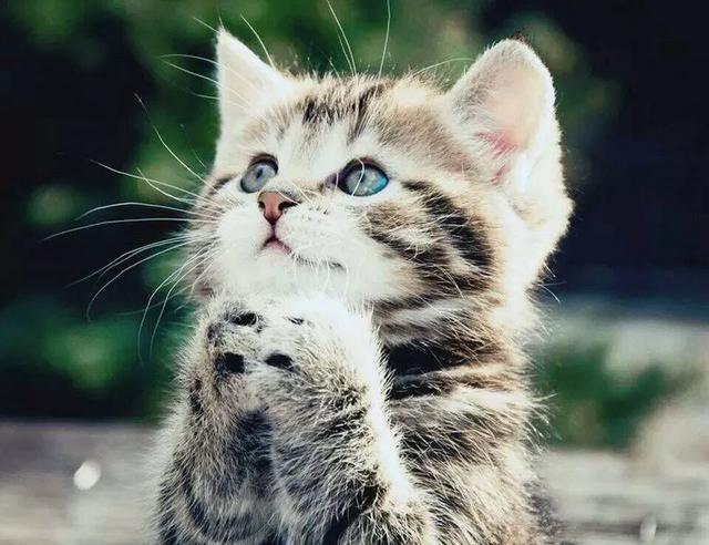 猫为什么吃老鼠?民间传说中的猫又是为什么吃老鼠呢?