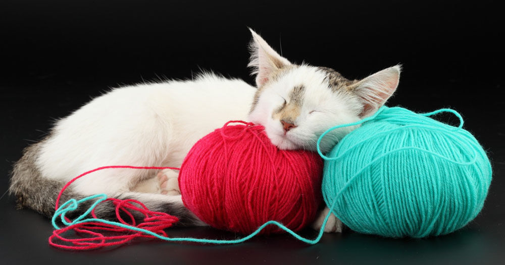 猫的生活习性,养猫需要注意什么?