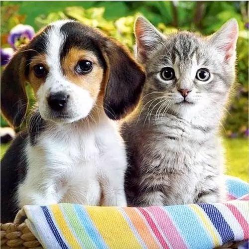 猫奴、犬奴的特点是什么?有哪些区别?