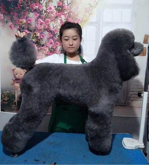 巨贵犬纯不纯怎么看